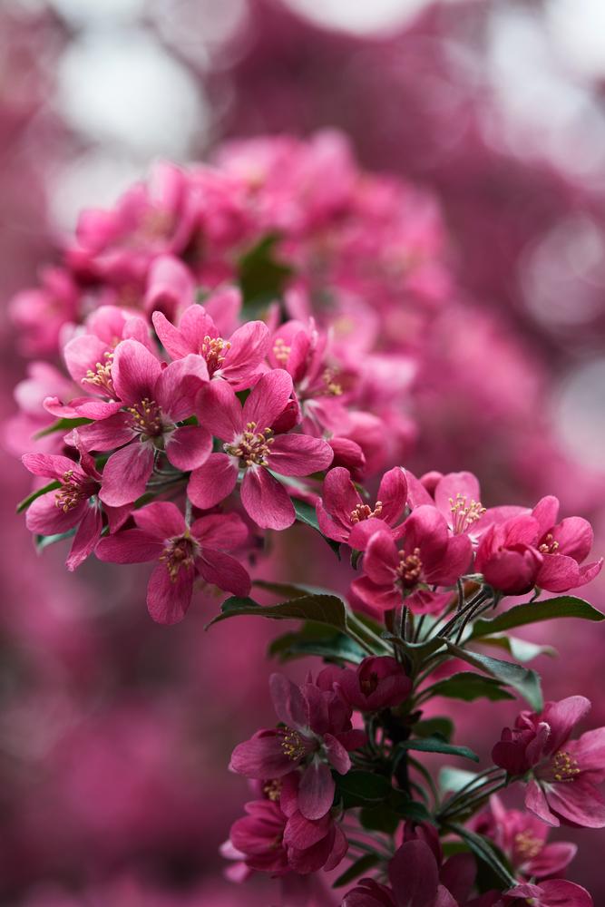 4 Beautiful Flowers In Japan Tebura